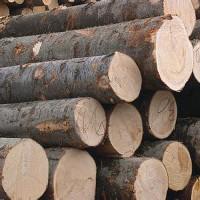 【木材建材】现货供应 专业加工各类建材 木材 可定制